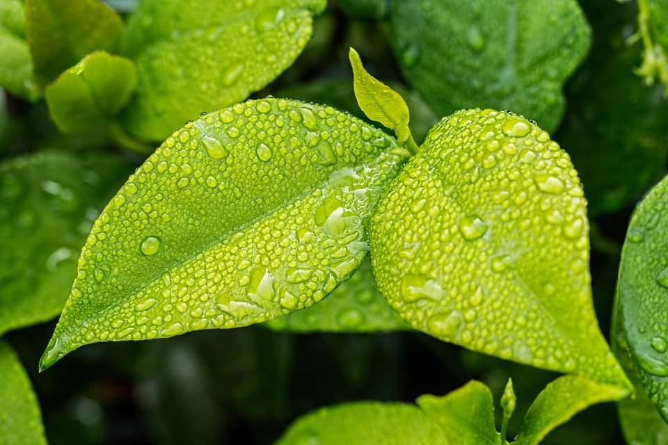 Importância da irrigação de canteiros e jardins